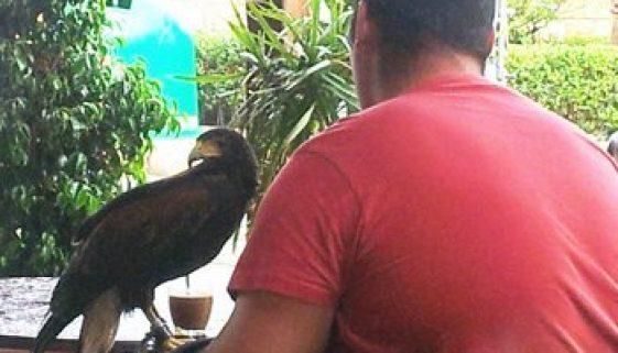 birds in bars