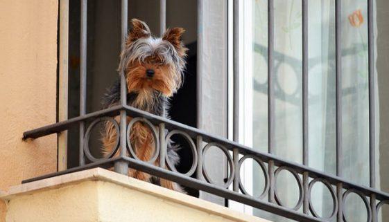 Barcelona news - Dog friendly areas