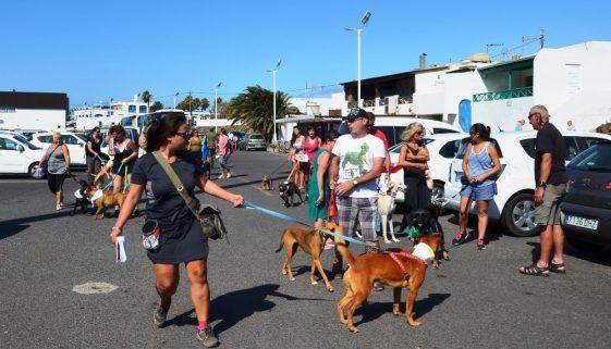 Lanzarote news   Pet neutering launched in Playa Blanca