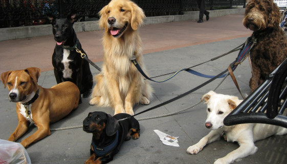 Costa Blanca news | New dog parks for Elche