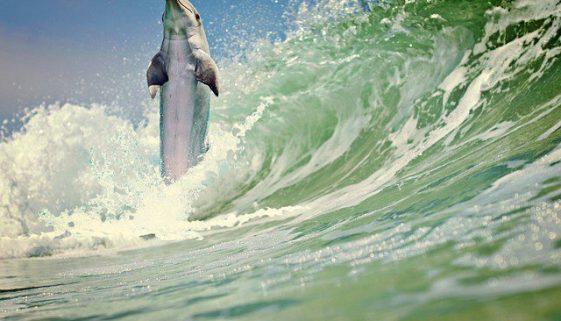 Dolphinarium Lanzarote