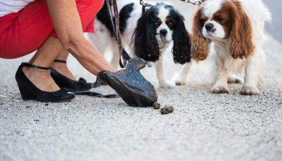 Malaga dog park allegedly built on mass grave