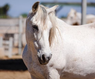 Help urgently needed to keep horse rescue centre open