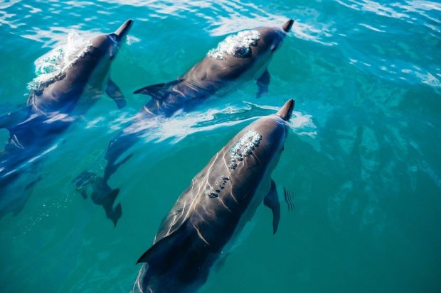 Spain's secret gems - Canary islands dolphins