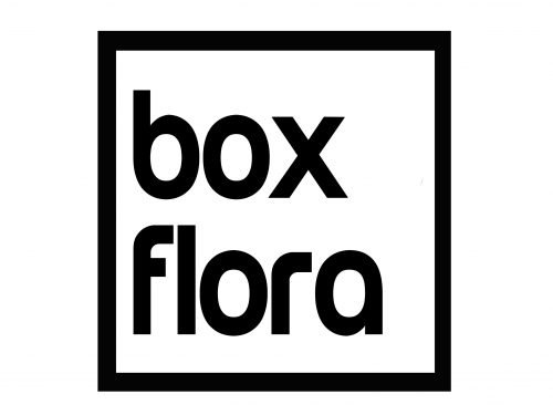 boxflora – flores a domicilio