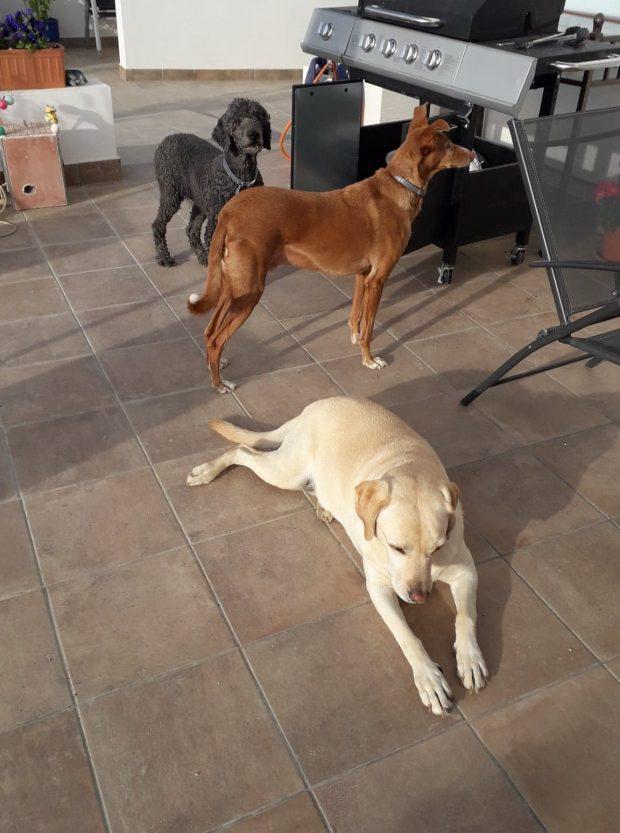 Casa Rural Cortijo los Lopez - the dogs