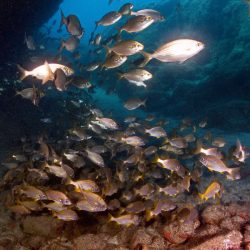 Shoals of marine life in Gran Canaria