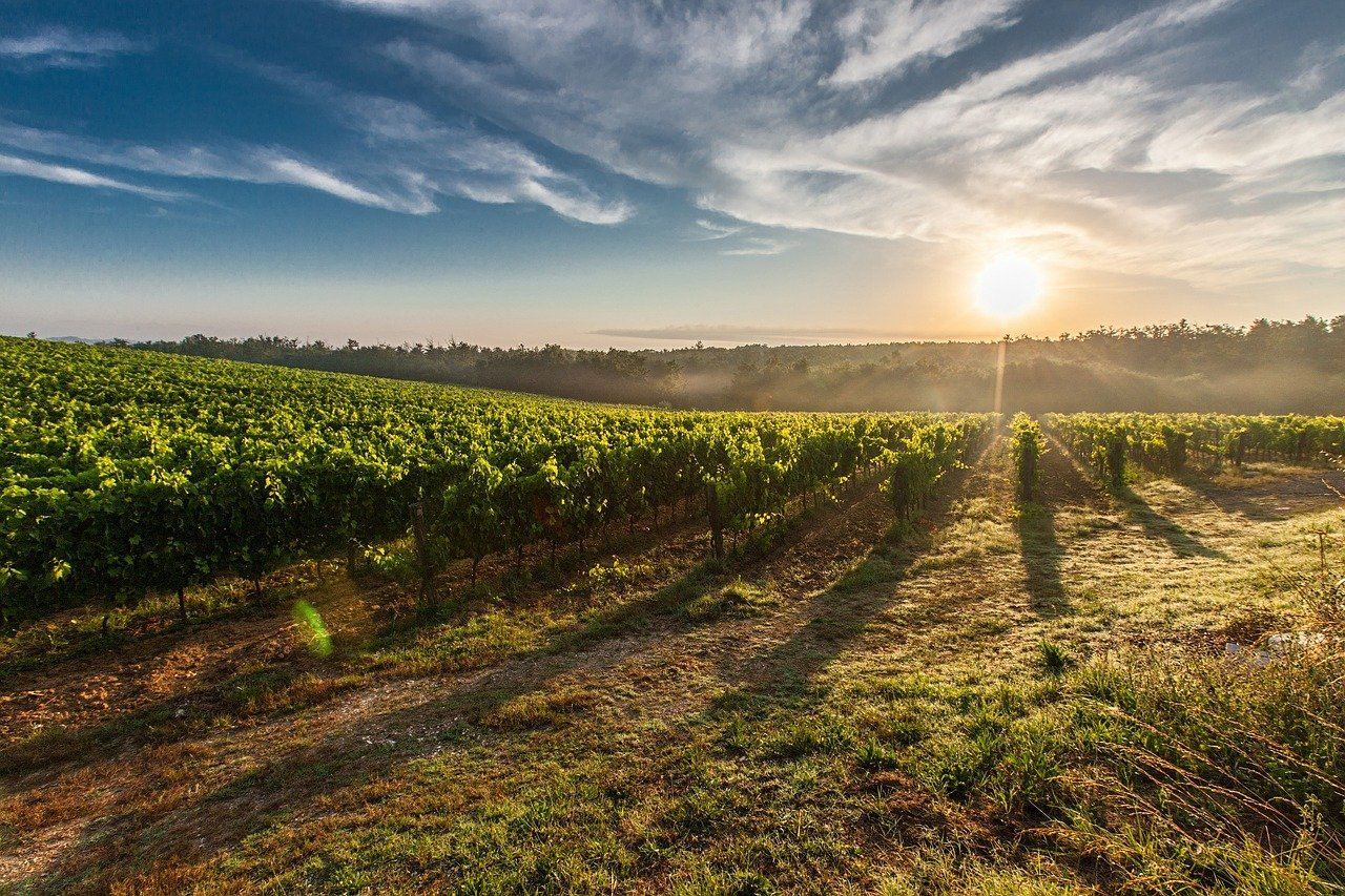 Spain winter itinerary: Plan your trip today! Vineyards